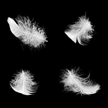 a set of white fluffy feathers in different angles on a black isolated background Stock Photo