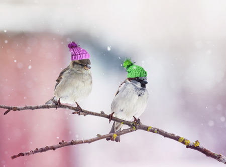 two cute little birds Sparrow sitting in a tree in the garden in wonderful hats related