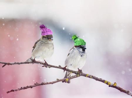 Zwei niedliche kleine Vögel Spatz sitzen in einem Baum im Garten in wunderschönen Turnschuhen arbeiten
