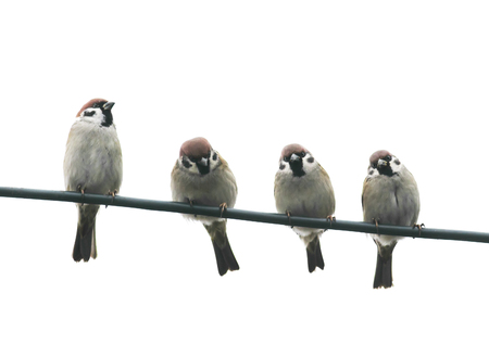 funny friendly little birds sitting on a wire on white sky background
