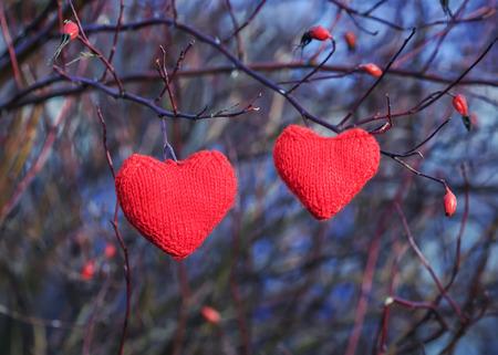 twee scharlaken gebreid van draden van het hart hangend in de takken van een wilde roos in de tuin