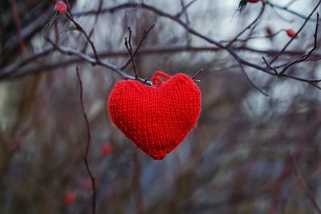 karmozijnrood gebreid uit draden van een hart opknoping in de takken van rode bessen van wilde roos in de tuin Stockfoto