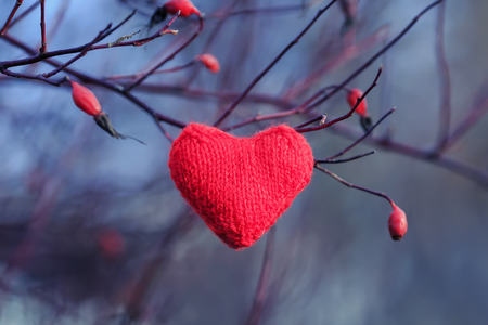 knitted red heart hanging among the branches of red berries of wild rose in the winter garden Stockfoto