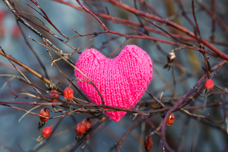 pink beautiful holiday knitted heart hanging among the branches of red berries of wild rose in the winter garden