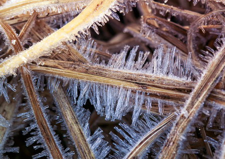 sharp shiny ice covered old dry grass of early winter morning