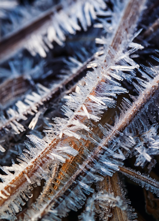 sharp and shiny spikes of ice covered the grass in a morning meadow winter