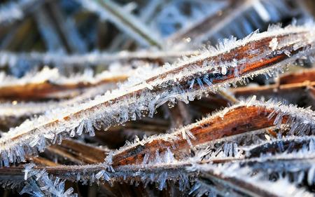 lange, scherpe en glanzende pieken van ijs bedekten het gras in de ochtendweides