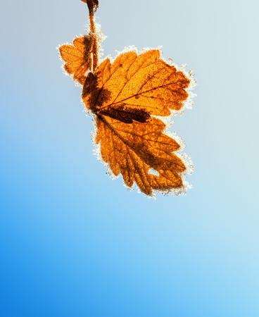 heldere bladeren herfst boom opknoping bedekt met sprankelende kristallen van frost in de tuin in zonlicht