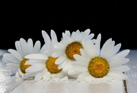 beautiful bouquet of delicate white flowers daisies on shiny wooden table