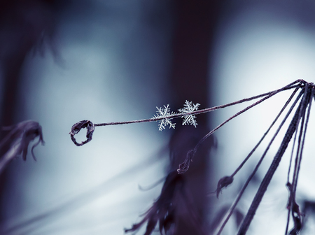 pair of carved beautiful cold shiny snowflakes hanging next to the sprig of grass in winter Park