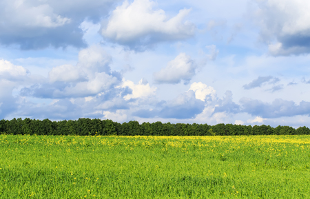 Fond rural naturel avec des prairies fleuries vert luxuriant, un ciel bleu vif, des nuages blancs et la plantation d'arbres à l'horizon Banque d'images - 94370428