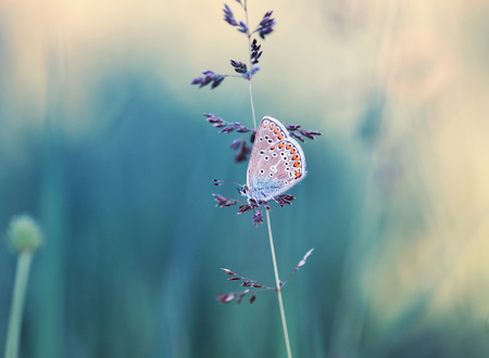 cute little blue butterfly sits on a blade of grass on the summer meadow beautiful Standard-Bild