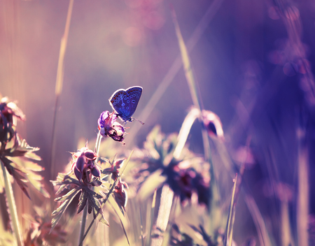 cute little blue butterfly sitting on a delicate and beautiful fairy purple meadow Standard-Bild
