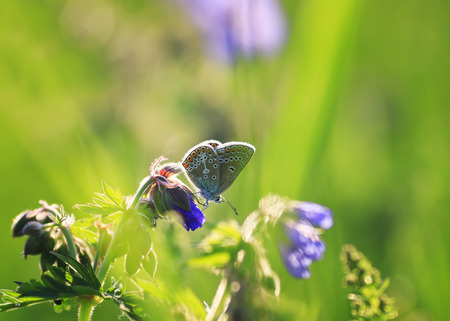 beautiful little blue butterfly sitting on purple flowers meadow summer Sunny day Standard-Bild