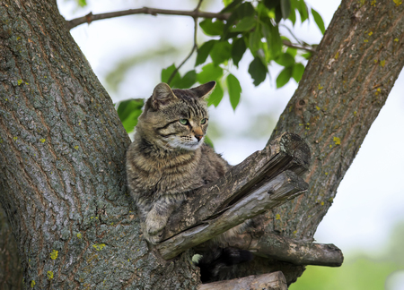 beautiful tabby cat imposingly sprawled on a tree in spring Park
