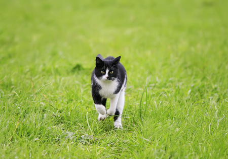 cute funny young cat running fun through a green juicy meadow in spring on a Sunny day Standard-Bild