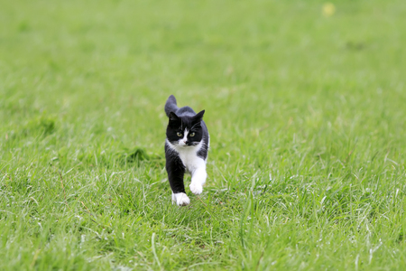 cute young cat running on a green juicy meadow