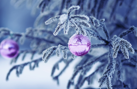 festive fir branch covered with white frozen frost and bright shiny Christmas ball toy Standard-Bild