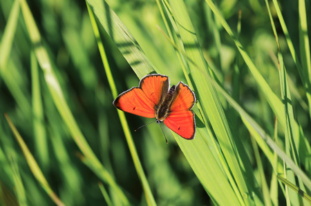 bright orange little butterfly sits on a green grass on a summer meadow