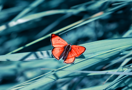 bright orange little butterfly sits on the background of a blue beautiful meadow