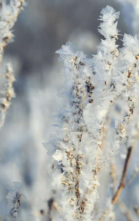 the shrubs and grass coverings cool carved ice crystals in the garden on a winter morning Stock Photo