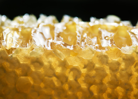 slice of delicious Golden honeycomb with flowing sticky sweet honey on black background Stockfoto