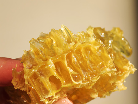 slice of tasty Golden honeycombs with leaking sticky sweet honey kept in fingers