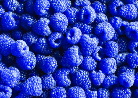 bright delicious natural background of many ripe unusual blue fragrant raspberry berries Stockfoto
