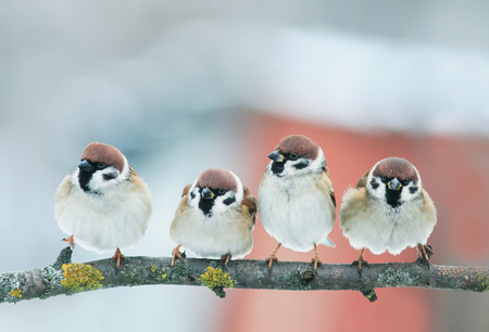 picture group of funny little birds sparrows on a branch in the garden on a clear day