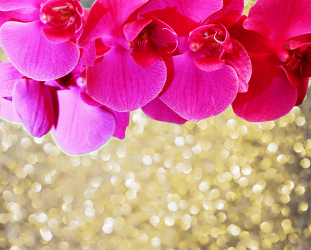 vertical floral festive pink Orchid background on blue delicate shiny texture