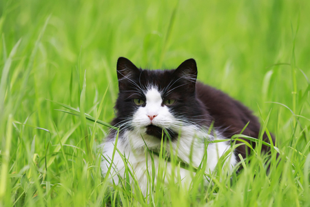 cute young beautiful cat lying in the grass on a green meadow on a Sunny spring day