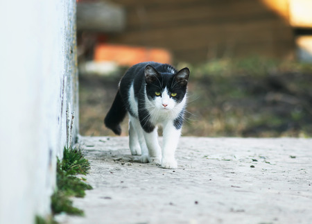 funny scared cute kitten sneaks down the path on the street