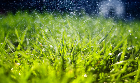 natural background of juicy green grass with shiny drops of water and light