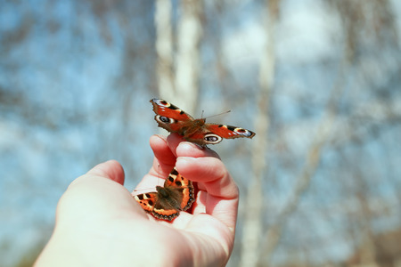beautiful fragile butterfly sitting on the palm of your hand and are going to fly to the sky