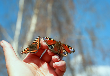 two beautiful fragile butterflies sit on fingers in hand and are going to fly to the sky
