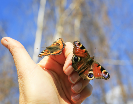 two colorful beautiful fragile butterflies sit on their fingers and are going to fly to the sky Stockfoto