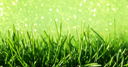 natural of juicy green grass on a shiny festive background with Golden circles