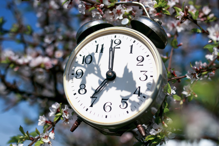 old metal alarm clock hanging in the spring garden on cherry blossoms on a Sunny day Stockfoto