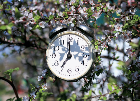 old metal clock alarm clock hanging in the spring garden on cherry blossoms on a Sunny day