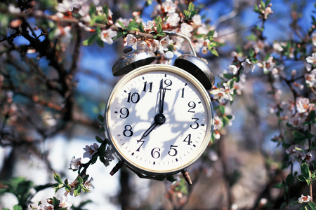 old-fashioned alarm clock hanging in the spring garden on cherry blossoms on a Sunny day