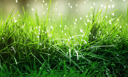 vivid natural background of juicy green grass and dripping rain on a spring day Stockfoto