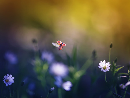 natural background with a little ladybug flying over a green meadow with white flowers to the sunlight on a summer day Stockfoto