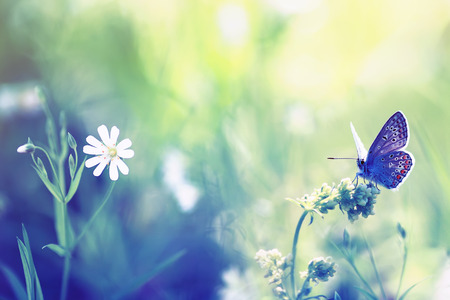 natural background with blossoming summer meadow and little blue butterfly