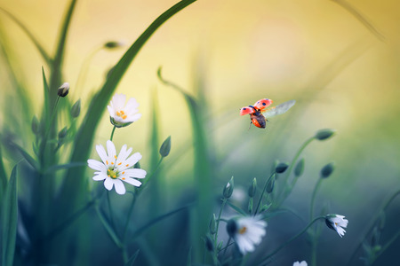 natural background with little ladybug flying wide straightening wings over blooming spring meadow on Sunny bright day Stockfoto