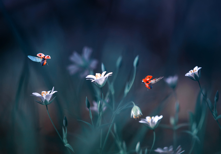 ladybugs fly in a forest clearing with beautiful white flowers in blue tones