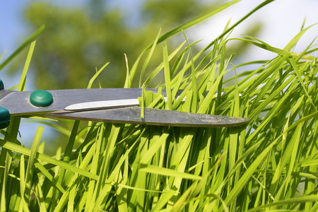 A sharp hairdressing scissors cut lush green grass in the garden on blurred blue sky background