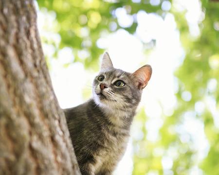 striped kitten climbed a tree in a summer garden and curious peeps out for the trunk