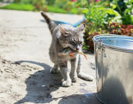 striped kitten caught fish in a bucket on the street in summer