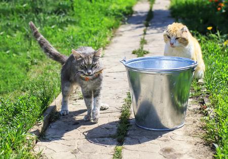 deft striped kitten caught fish in a bucket on the street in summer Stock Photo