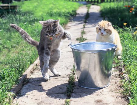 dexterous striped kitten caught fish in a bucket on a summer fishing trip